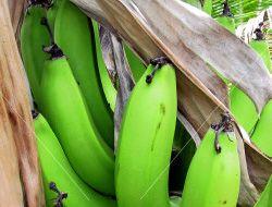 Green Banana Salad